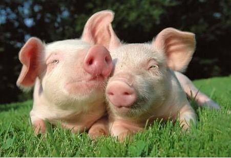 畜牧猪牛羊大数据养殖解决方案